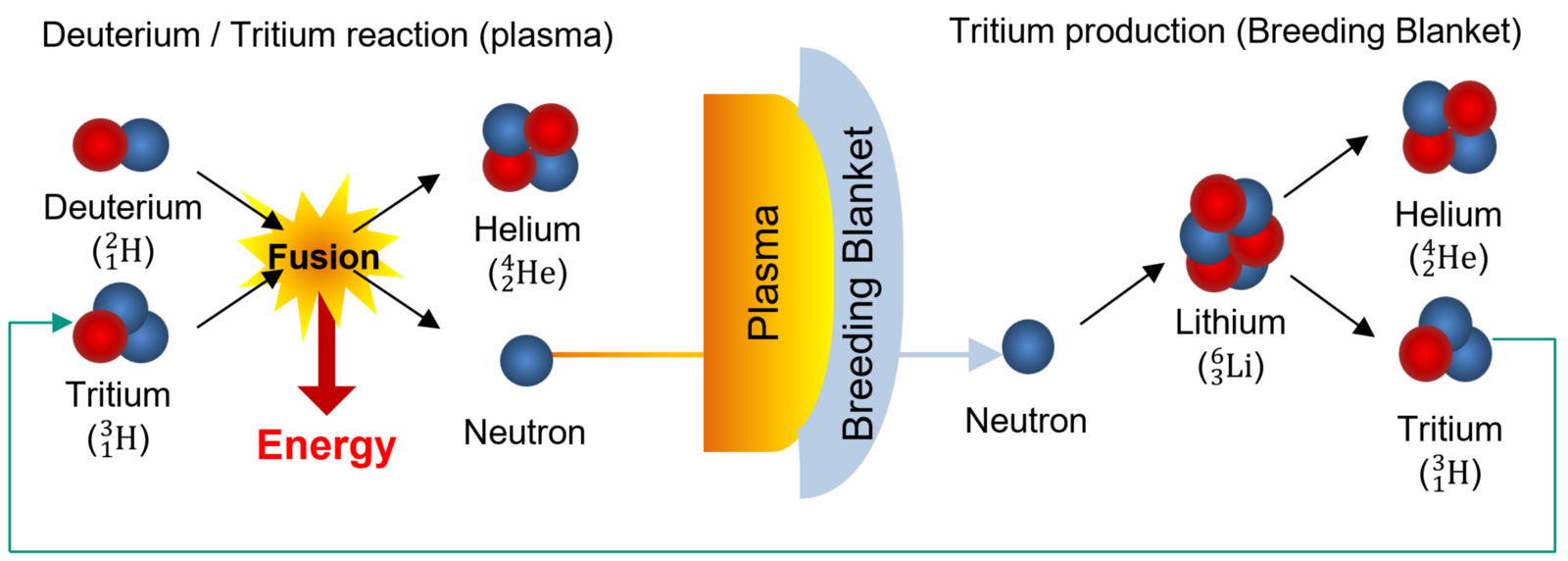 Tritium: a challenging fuel for fusion- EUROfusion
