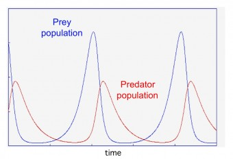A calculation of the relationship between the populations of predators and their prey