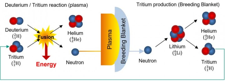 Picture 1: Schematic diagram of the tritium breeding inside a fusion reactor. Deuteriumtritium atoms fuse in a hot plasma to produce one atom of helium-4 atom, one neutron and, along with it, energy. The fusion neutrons will escape the plasma and react with lithium atoms present in the so-called breeding blanket to produce atomic tritium. Picture: KIT-ITeP-TLK